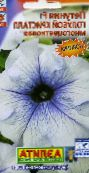 photo Garden Flowers Petunia light blue